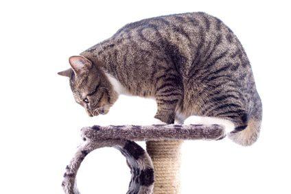 Katzenkratzbaum Ratgeber