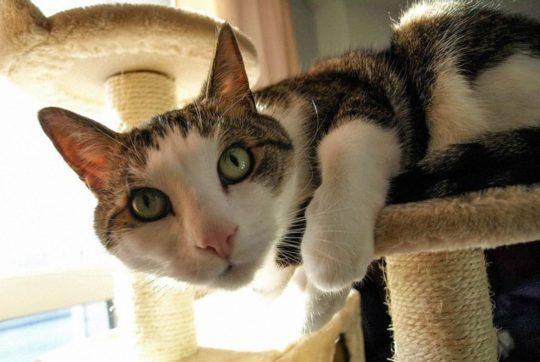 Kratzbaum bestellen - Ratgeber zu Kratzmöbel und Katzen