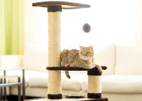 Katzenkratzbaum selber bauen oder fertig kaufen?