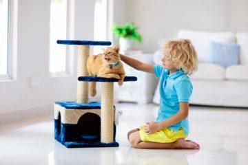Ratgeber Kratzbaum – Welchen Katzenkratzbaum brauche ich für meine Katze?