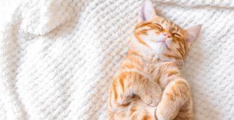 Selbstheizende Decke für Katzen