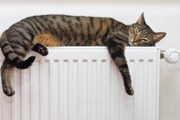 Heizungsliegen für Katzen