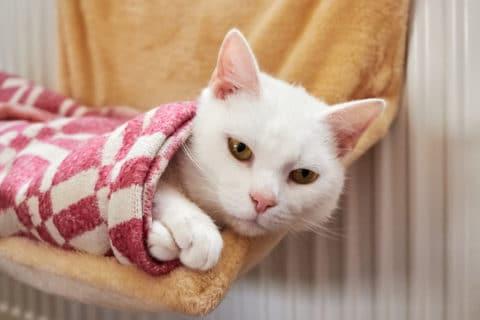 Heizungsliege für die Katze