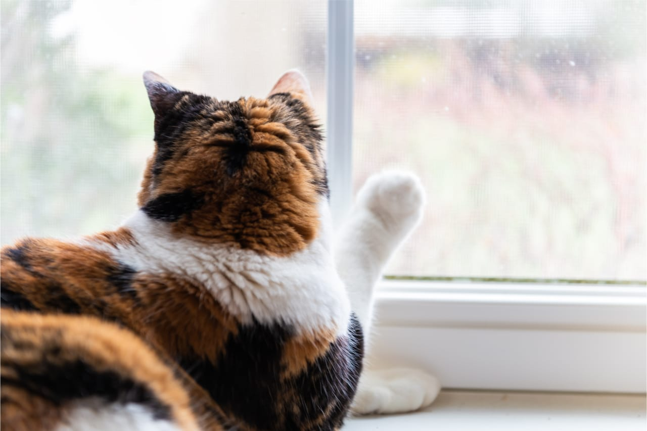 Fensterbankliege für Katzen