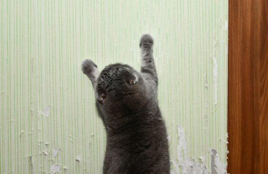 Hilfe meine Katze kratzt an der Tapete – Was kann man tun?