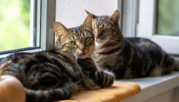 Fensterbankliege für Katzen – Die bequeme Katzenliege direkt am Fenster