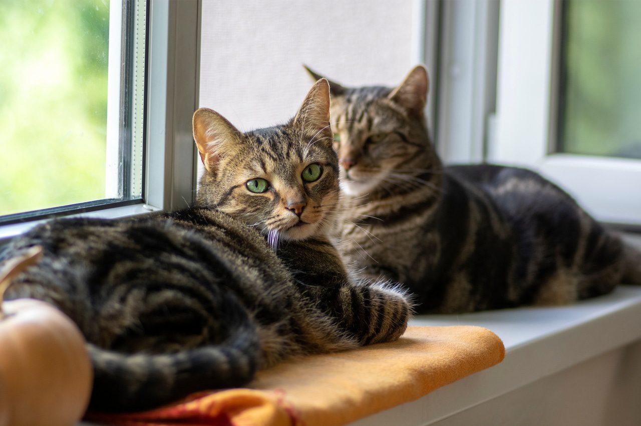 Katzen auf der Fensterbank