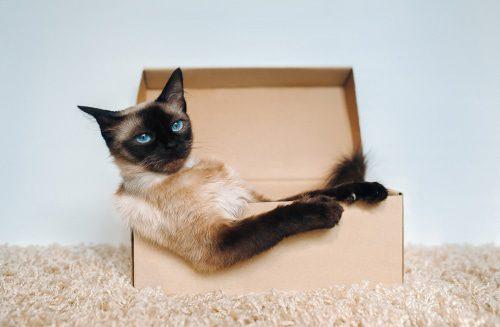 Pappkarton als Rückzugsort für Katzen