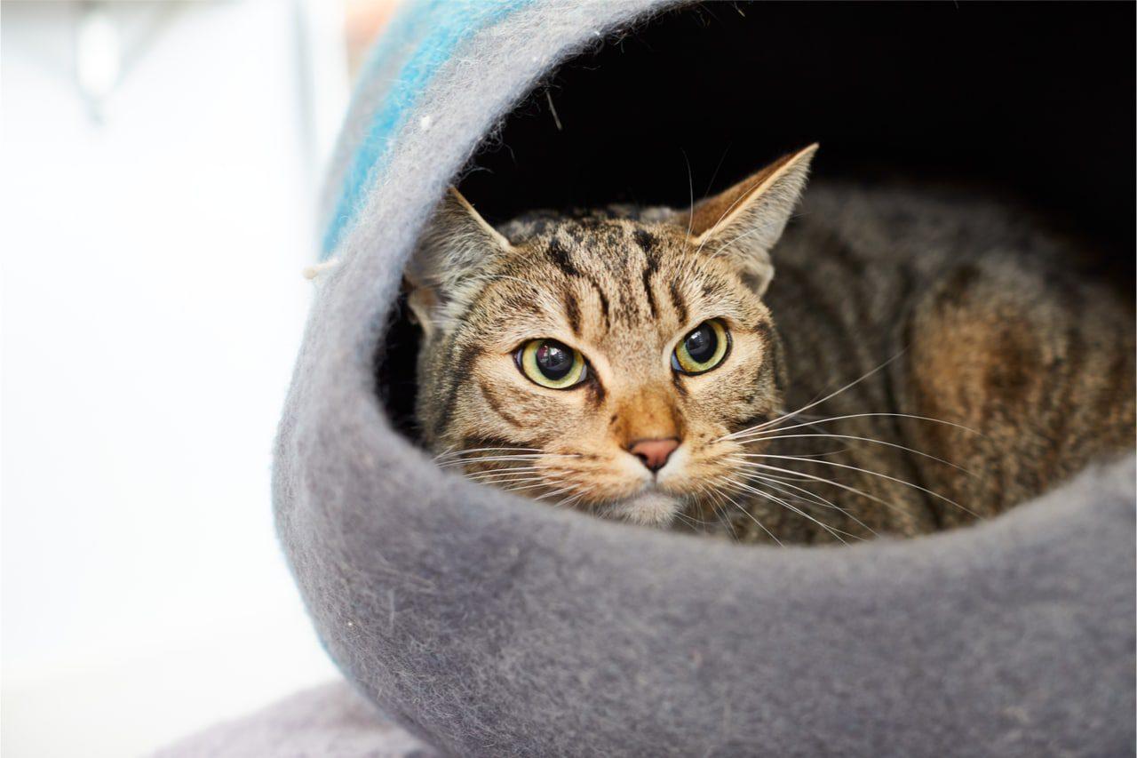 Kuschelhöhle für Katzen