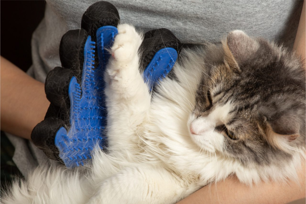 Fellpflege mit Katzenhandschuh