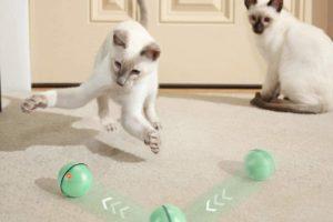 wwvvpet-katzenspielzeug-ball-bild3