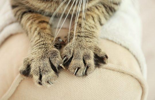 Katze kratzt an Möbeln – Was kann ich tun?