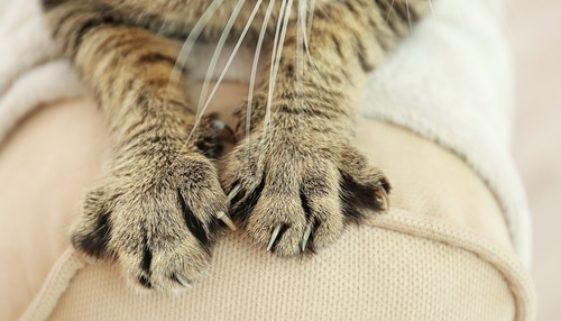 Katze kratzt an Polstermöbel