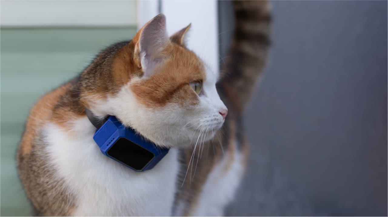 Katze mit GPS Tracker