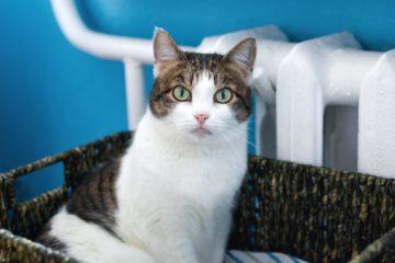 Katzenbetten und Liegen für die Heizung