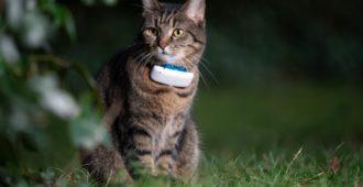 GPSTracker für Katzen