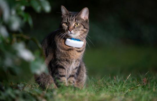 Wie kann ich meine Katze orten?