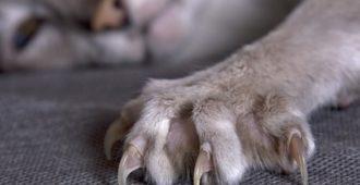 Kratzmatte für Katzen - Die günstige Alternative