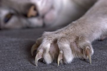 Kratzmatten für Katzen – Günstige Alternative zum Kratzbaum und flexibler als Kratzbretter