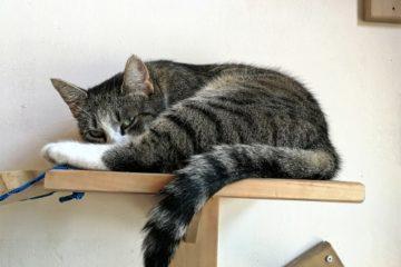 Wandliege für Katzen – Wandliegebrett platzsparend an der Wand montiert