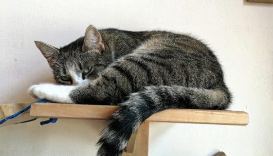 Wandliegebrett für Katzen