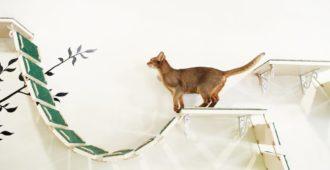 #Wandpark für Katzen