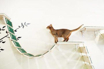 Wandpark für Katzen – Kletterparadies auf kleinstem Raum