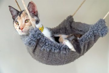 Hängematte für Katzen – Platzsparender Aussichtspunkt für die Katze