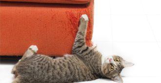 Kratzschutz für Möbel