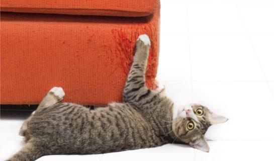 Kratzschutz für Möbel – Schutz vor Kratzattacken der Katze