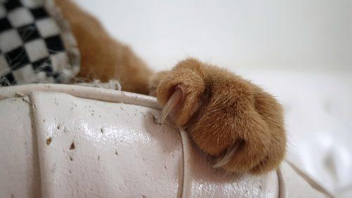 Katzen: Zerkratztes Sofa verhindern