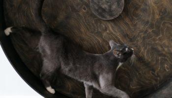 Katzenlaufrad – Fitness für Wohnungskatzen