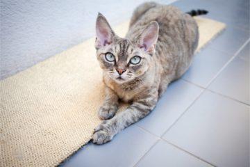 Kratzteppiche und Kratzmatten für Katzen