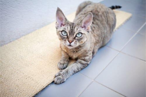 Kratzteppich für Katzen
