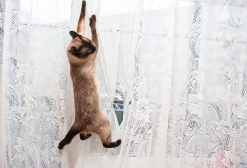 Katze hängt in Gardine