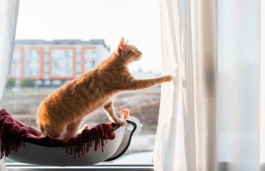 Katzen von Vorhängen und Gardinen fernhalten